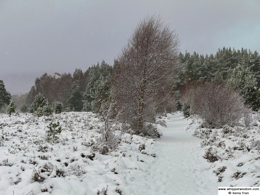 Forest trail near mountains covered in snow under a grey sky