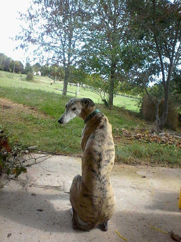guarddog2