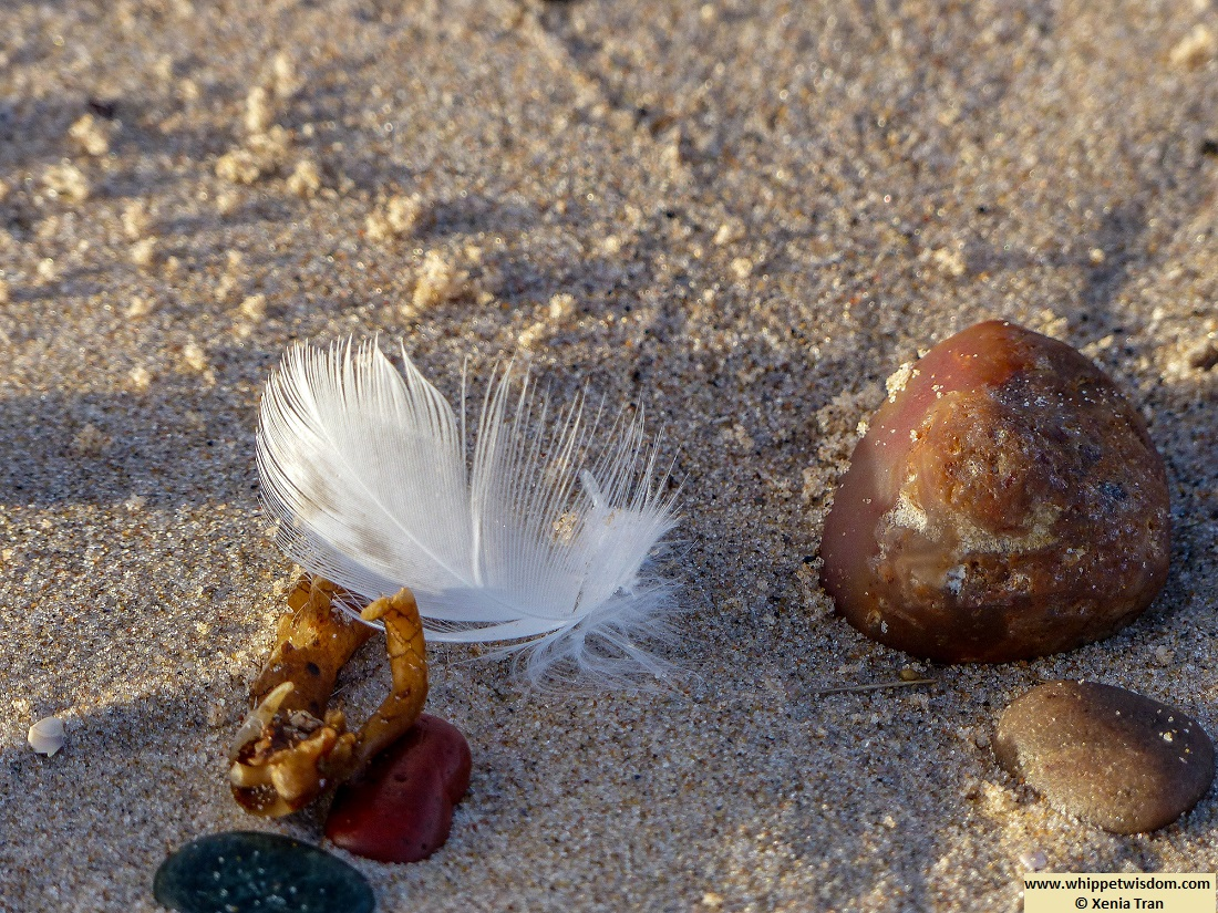 white feather with stones and seaweed on beach