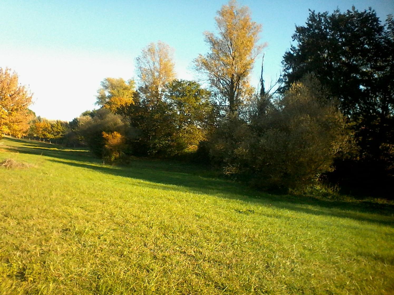 south field