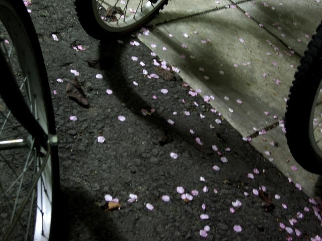 makou0629 - fallen petals