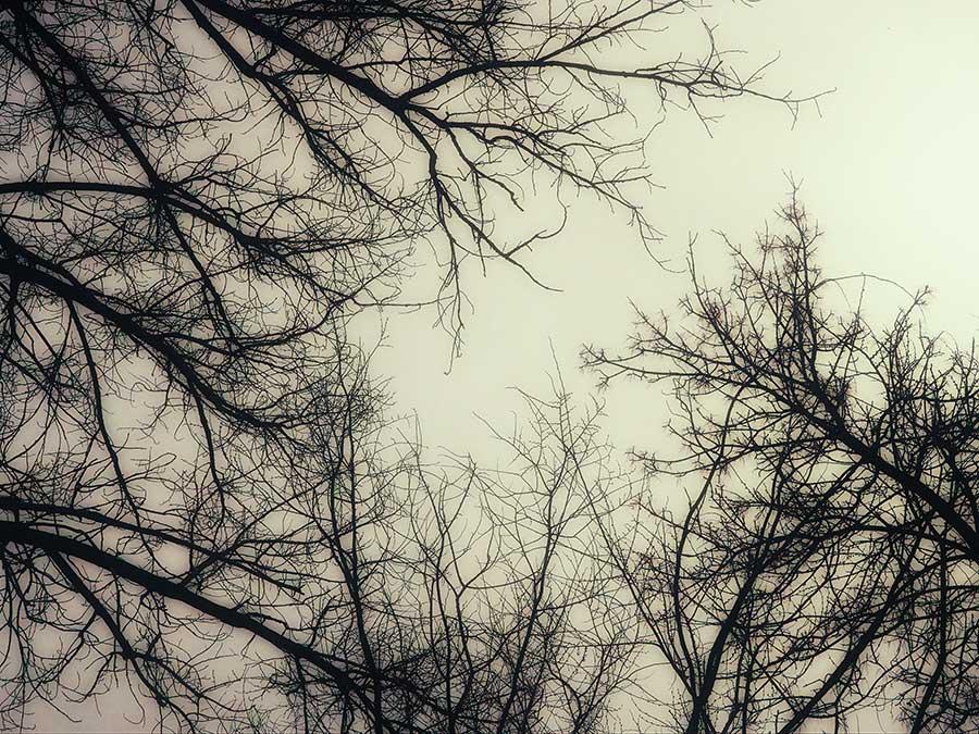 treebranchesweb