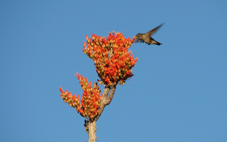 hummingbird-93472_1920