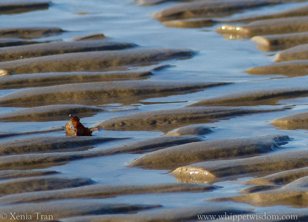 sea wave ripples in tidal sands with a curled autumn leaf