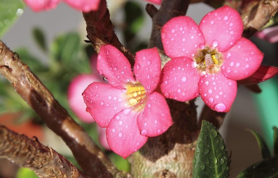 flower-858312_1280
