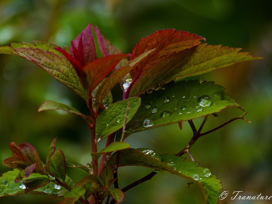 close up of raindrops on spring leaves