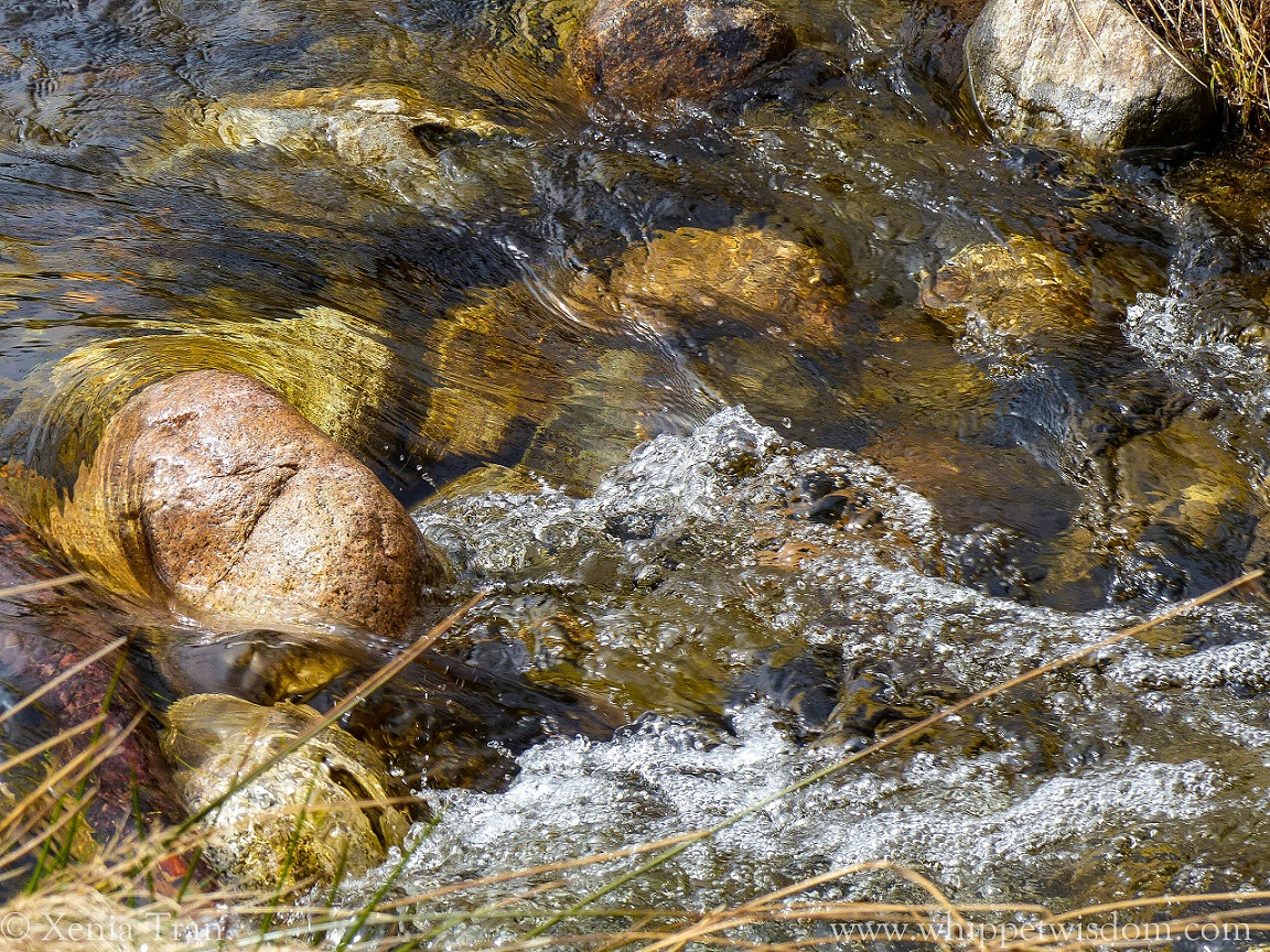 shallows in flowing river with clear water and river stones