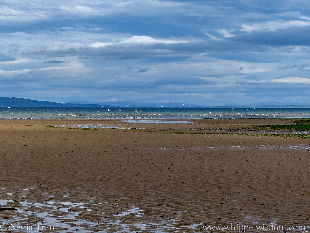 beach at low tide with cloudy skies and blue mountains across the water