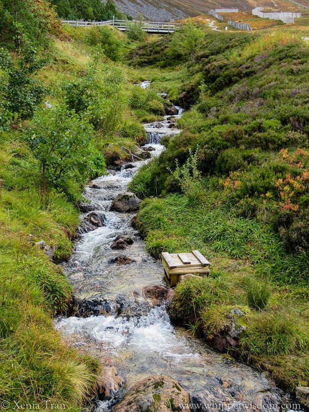 water cascading down a mountain stream over large stones