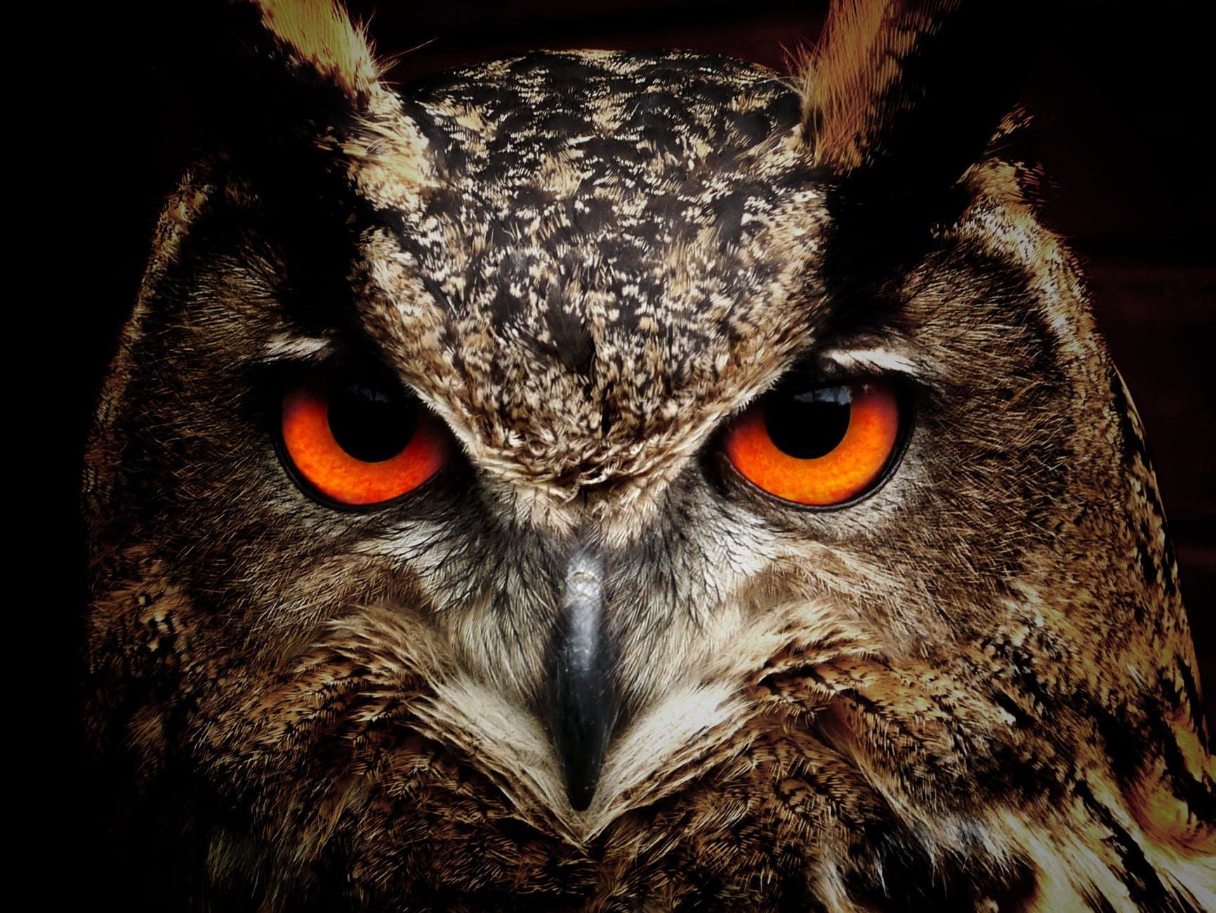 bird eyes animals birds