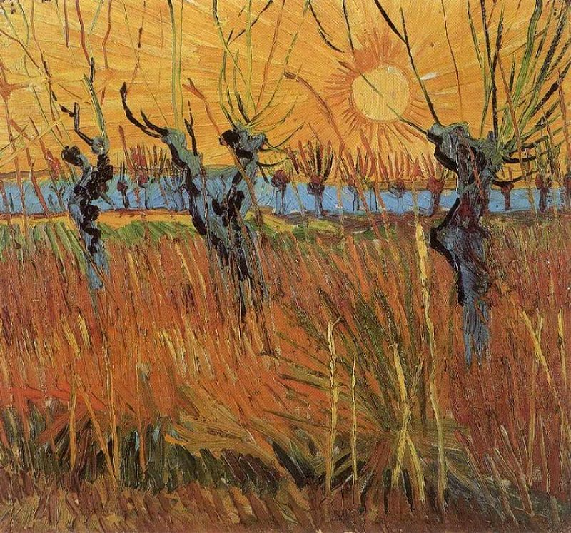 willows-at-sunset