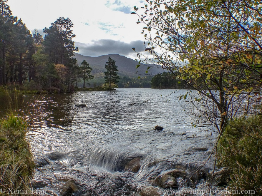 Loch an Eilein in autumn colours, water flowing in a small waterfall towards the burn