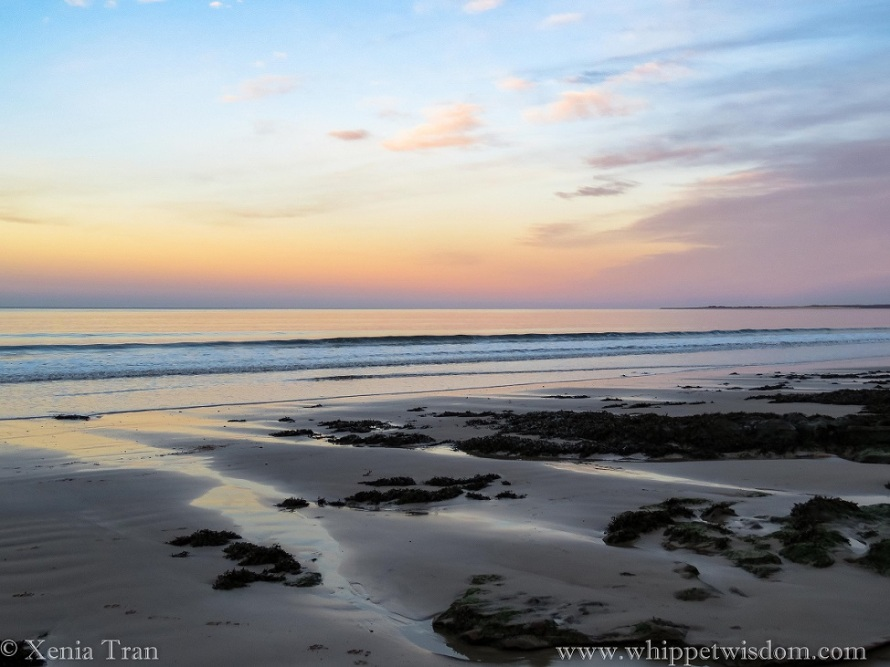 gold and pink twilight sky seen from the beach with an outgoing tide