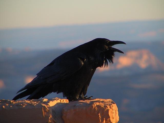 raven frank's prompt