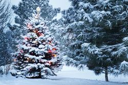 stock-photo-this-snow-covered-christmas-tree-stands-out-brightly-against-the-dark-blue-tones-of-this-snow-149084435