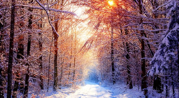 winter free wallpaper e