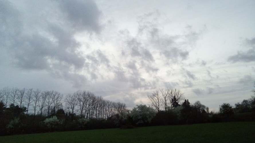 grey sky blossom