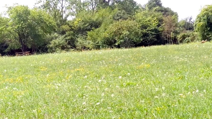 august meadow2.jpg