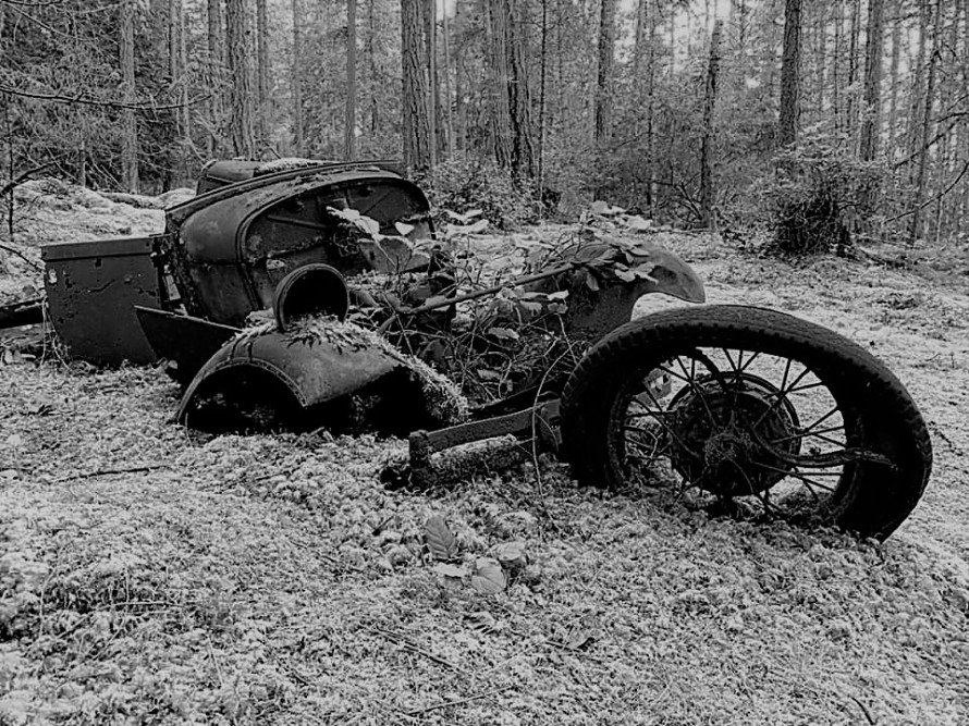 Old model A rusting away - Marc Andrew (4)