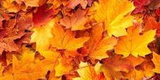 autumn colour download