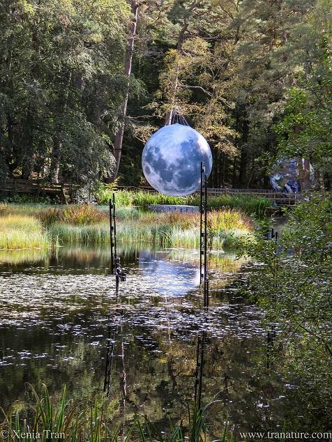 a full moon art work suspended in Faskally Wood
