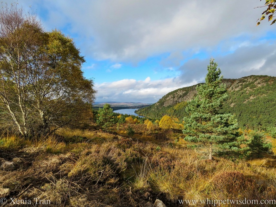 view over Loch Migdale from the hills of Ledmore Woods in Autumn