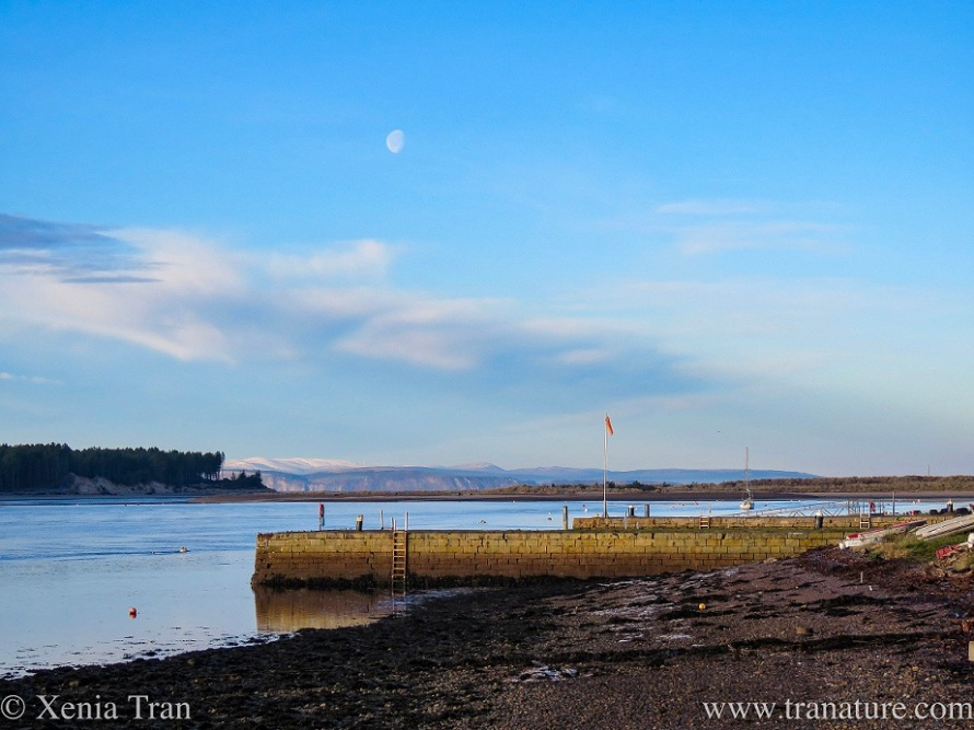 the day-moon in a blue sky over Findhorn Bay