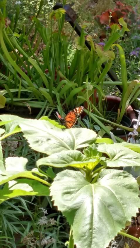 5_22 Butterfly!!