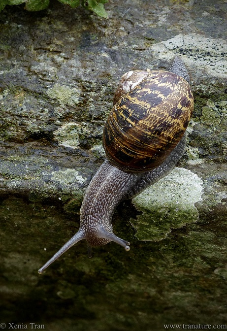 macro shot of a snail on the edge of a wall
