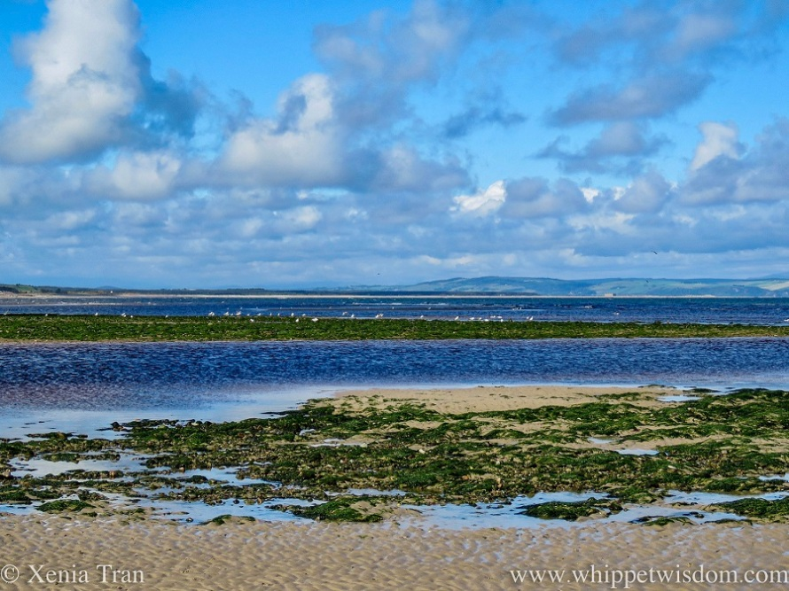 tidal sands and sandbars covered in seaweed