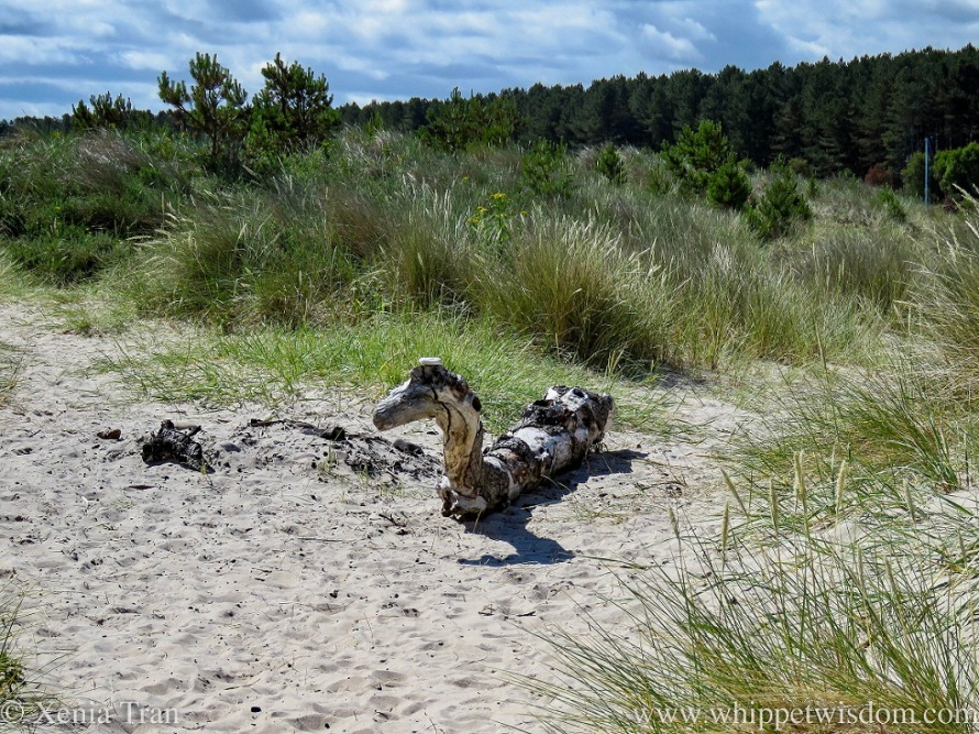 part of a driftwood tree shaped like a dragon in the dunes