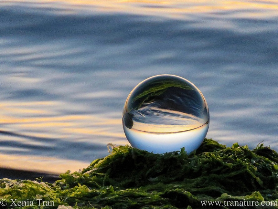lensball resting on seaweed at sunset by the sea