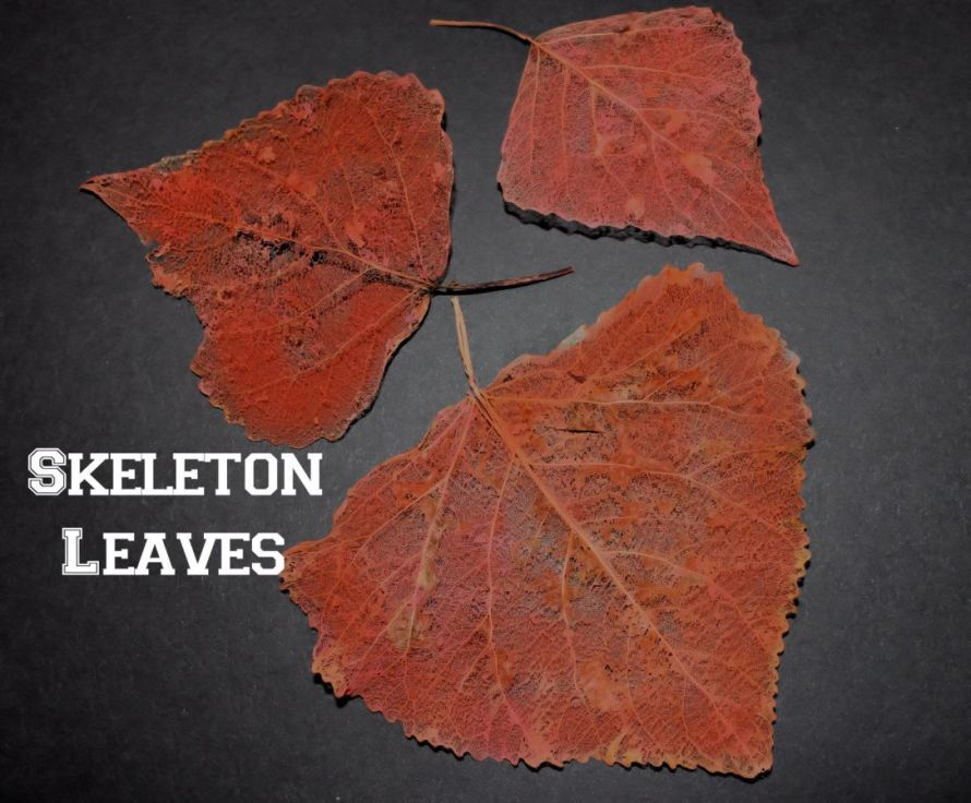 SkeletonLeaves