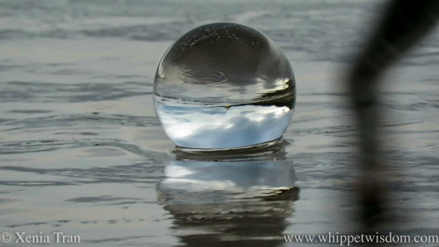 a lensball in the surf with the blur of a whippet's paw in the right hand foreground