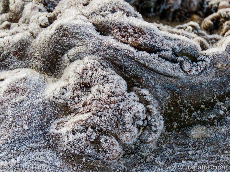 close up of part of a large driftwood tree covered in frost