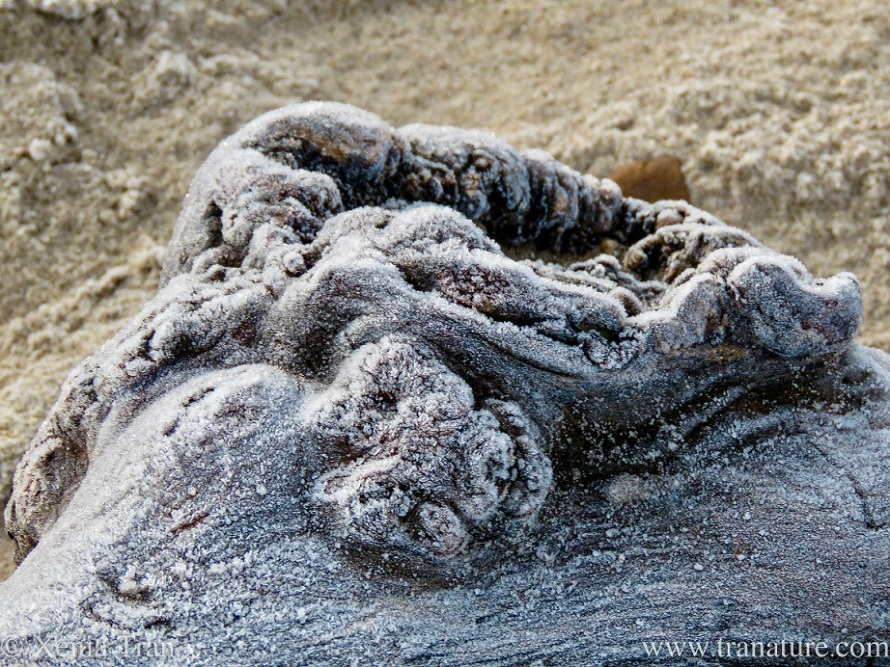 part of a large driftwood tree on the beach covered in frost