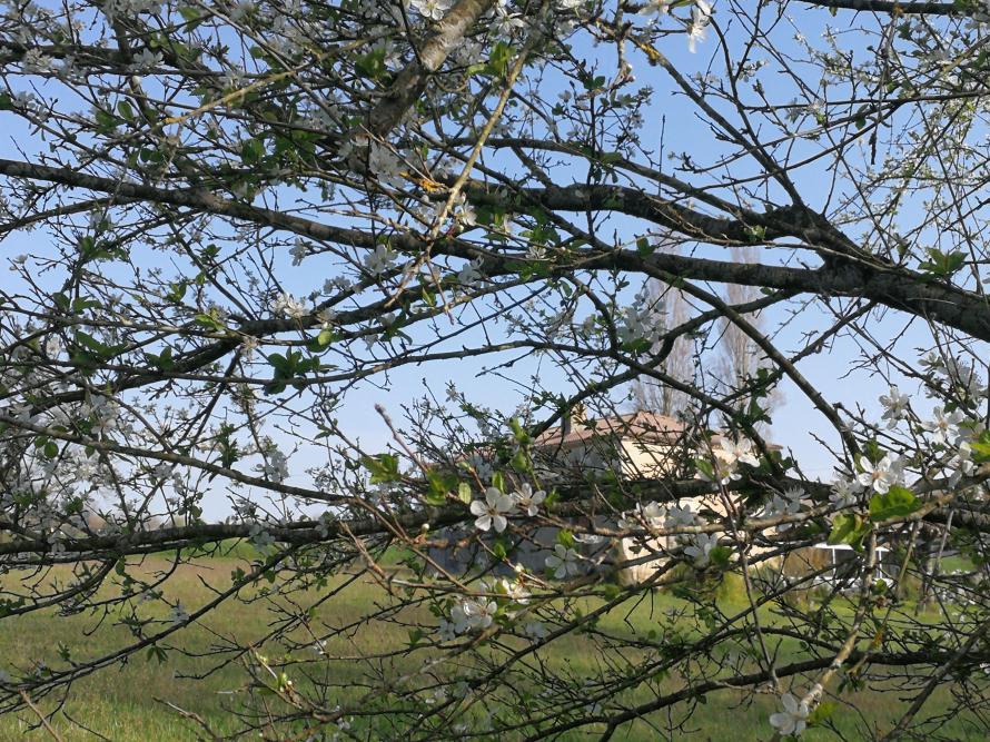 house through blossom