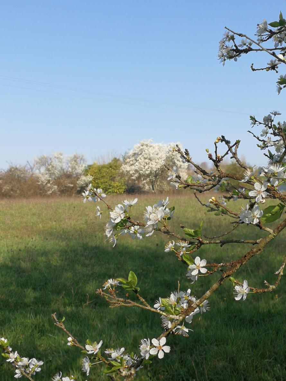 march plum blossom