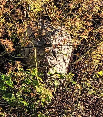 resized closeup of wasp nest 092921